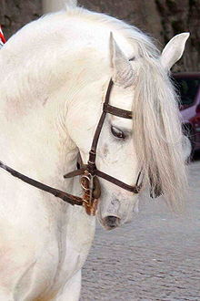 WHITE HORSE USE VISION LOVELY